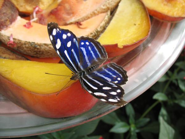 Butterfly 05 by Sunspot01