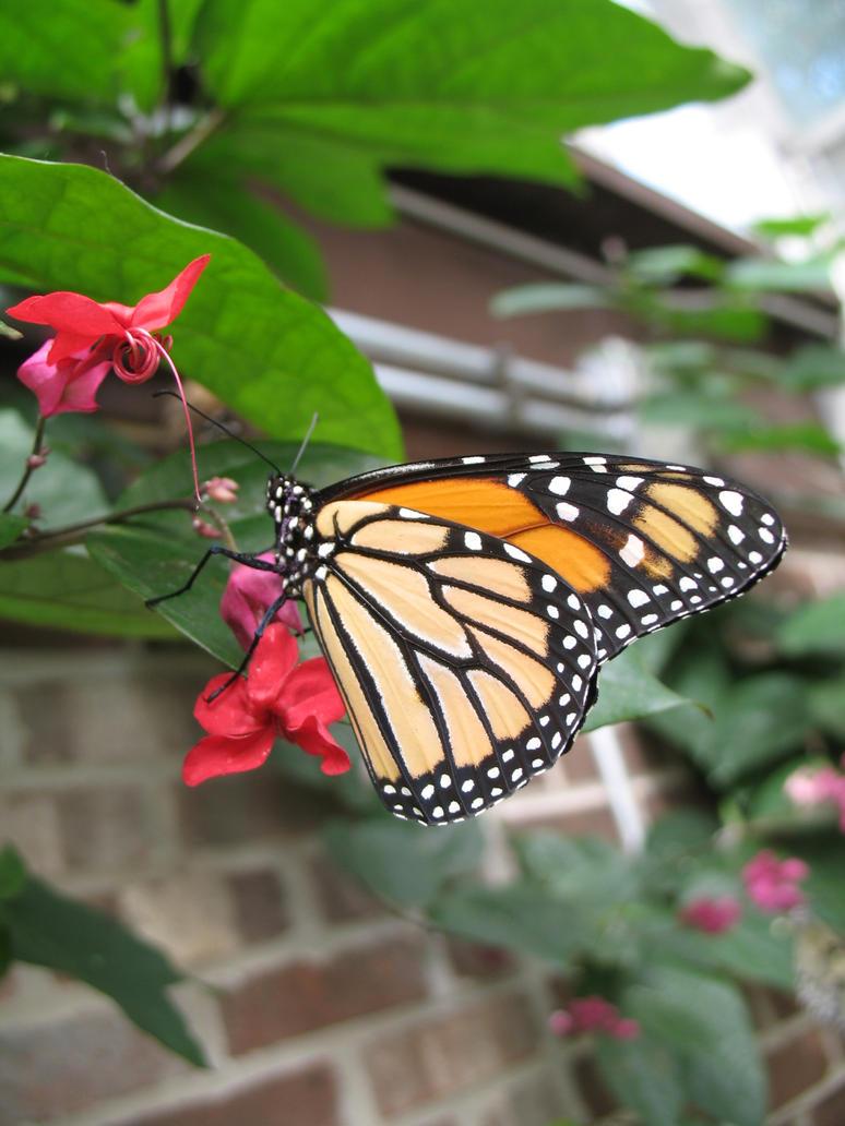 Butterfly 07 by Sunspot01