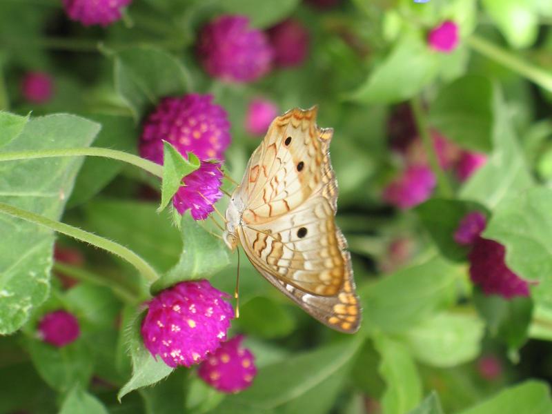 Butterfly 09 by Sunspot01