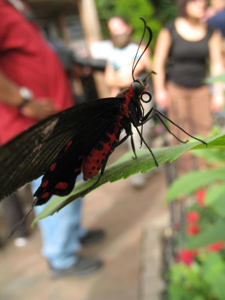 Butterfly 10 by Sunspot01
