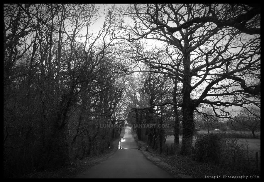 Country Lane by Lunapic