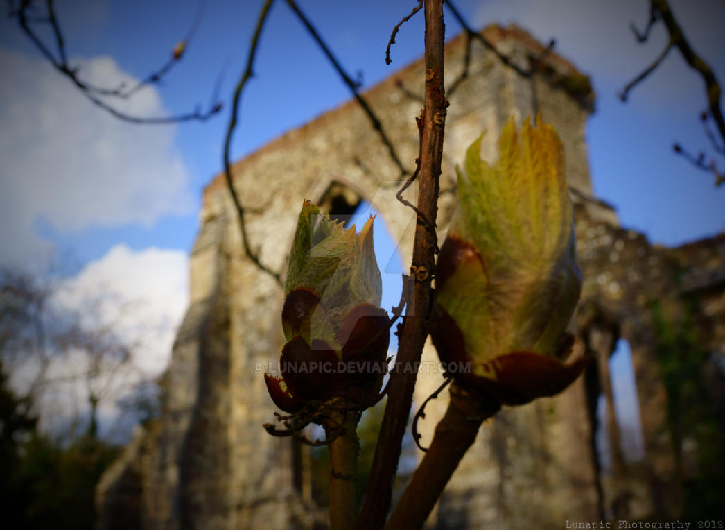 Plant @ The Abbey by Lunapic