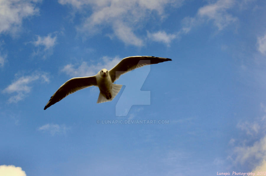 Gull by Lunapic