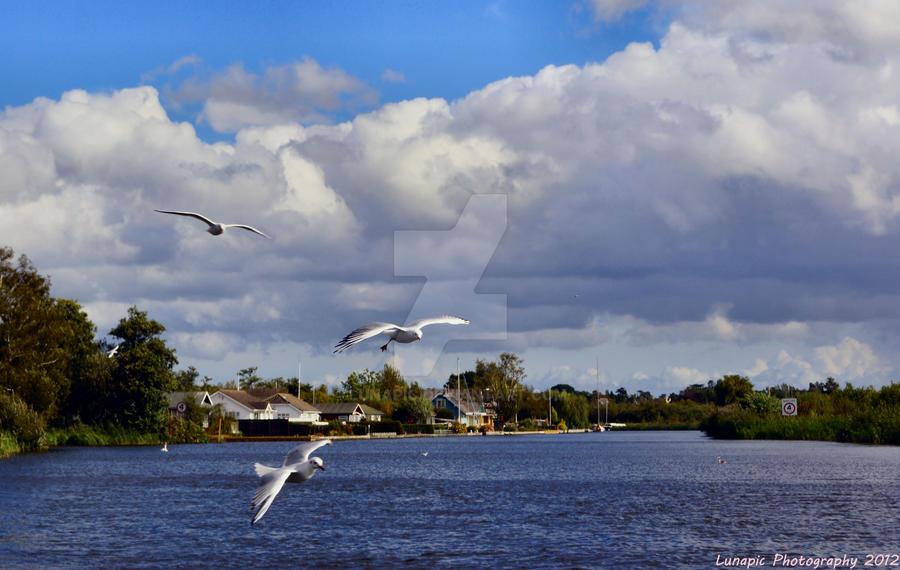 Gulls by Lunapic