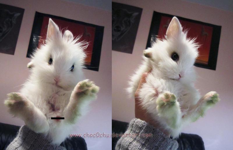 Cute fur ball by Choc0Chu