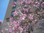Pink Magnolias 2