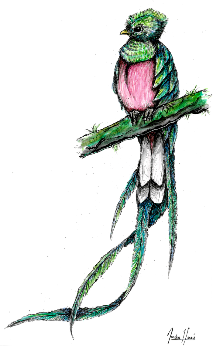 quetzal drawing special offers