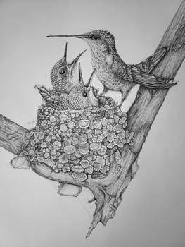 Ruby-throated Hummingbird Nest