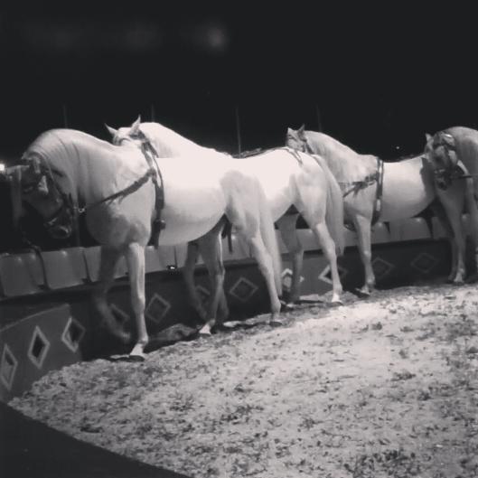 White Cirkus Horses by HanaYuno