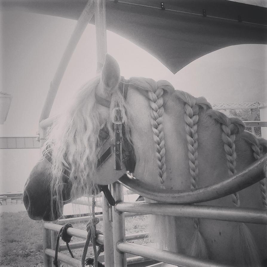 Amigo Andalusia Horse by HanaYuno