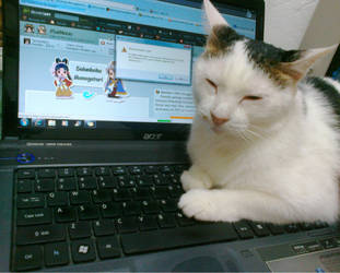 You Are Fired! - my secretary sleeps on the job by pergamjee