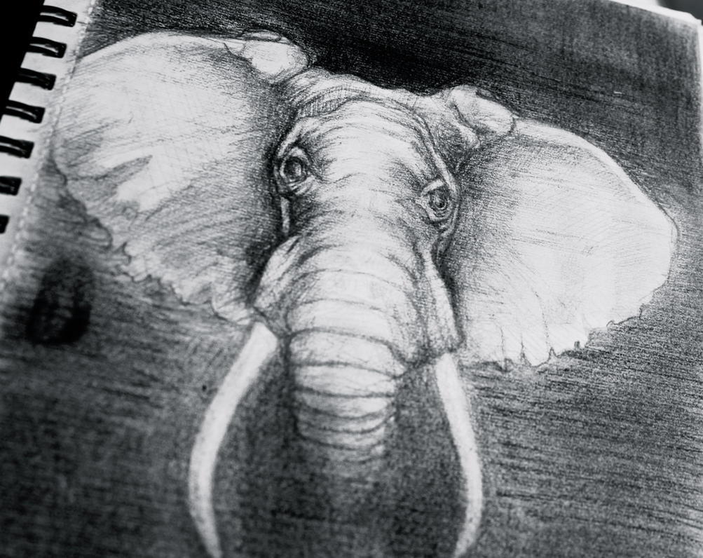 elephant by audr3h