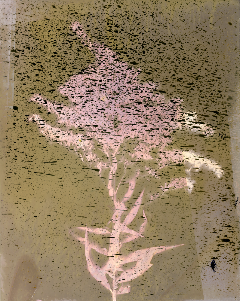 Lumen Print 6 by allistella