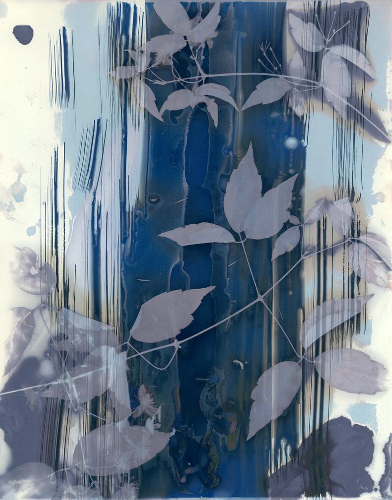 Lumen Print 7 by allistella