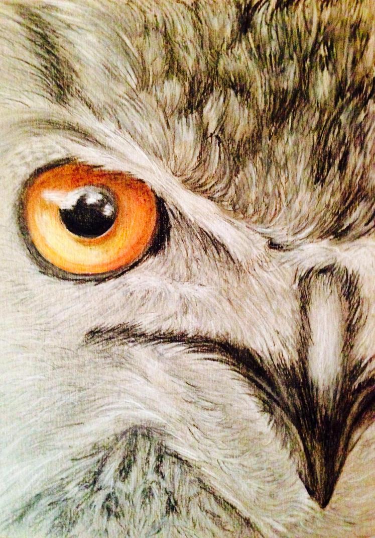 Owl Eye by SnailforPresident