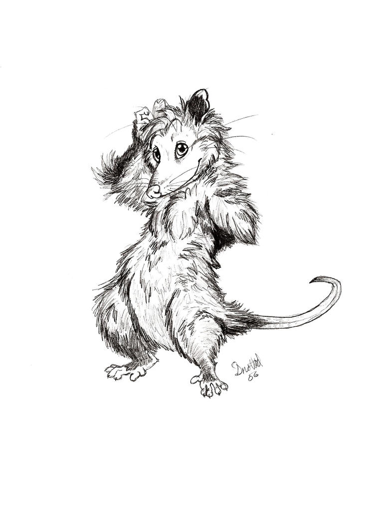 Uncategorized Possum Drawing sexy possum by snotted on deviantart snotted