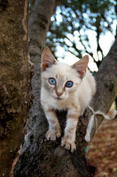 with fur white as snow and eyes blue as gentian