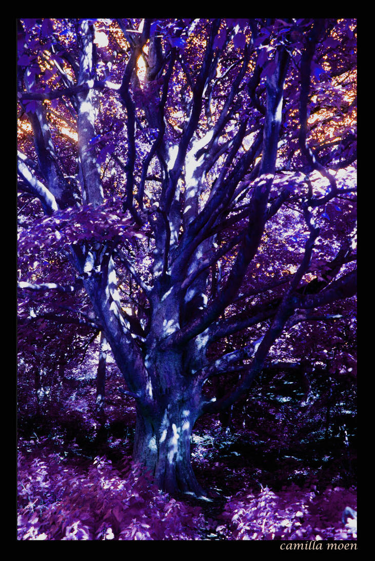 Lilla tree by camimo
