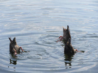 synchronised swimmers by Seahorse-61