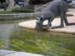 Kanagaroo Sculpture Laps Water