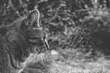 Staring in greyscale by Jefsel