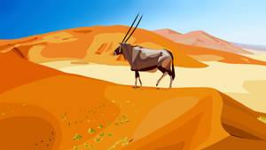 Photo study - Oryx