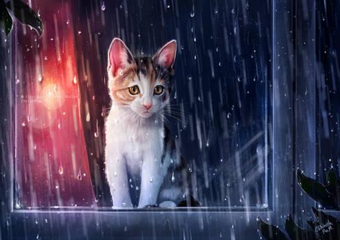 Gunilla the cat