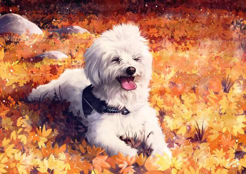 Linus the dog