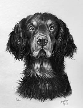 Prins the dog