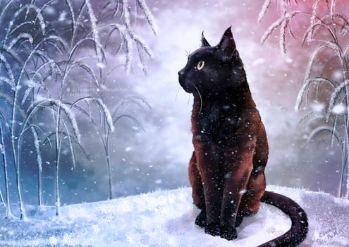 Kiara the cat