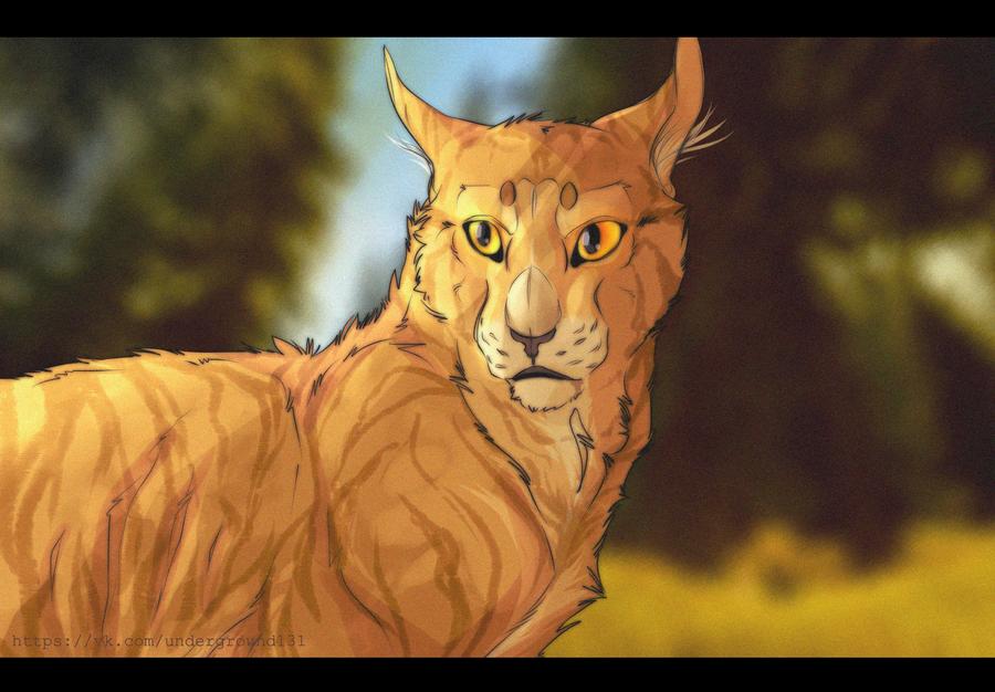 Lionblaze by SpiritOfBlackComet