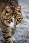 Sauron's Cat
