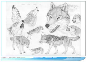 Wolves by aviondesign