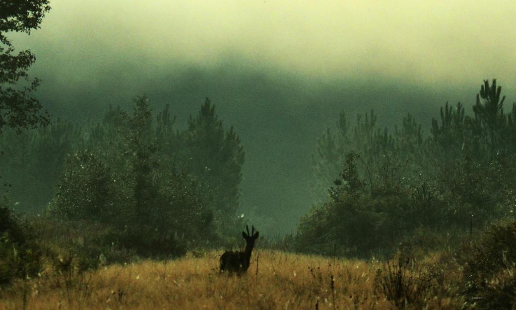 Forest spirit by Piscisvolantis