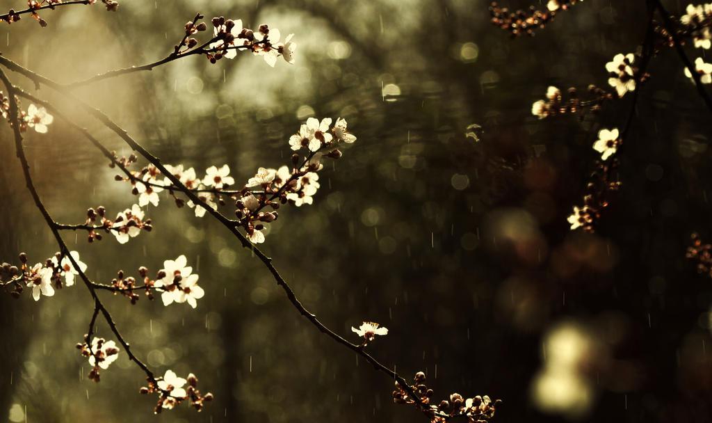 Spring! by Piscisvolantis
