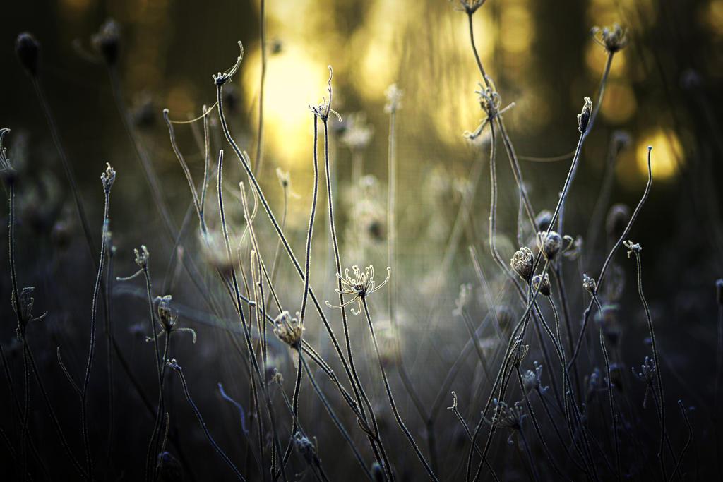 Winter by Piscisvolantis