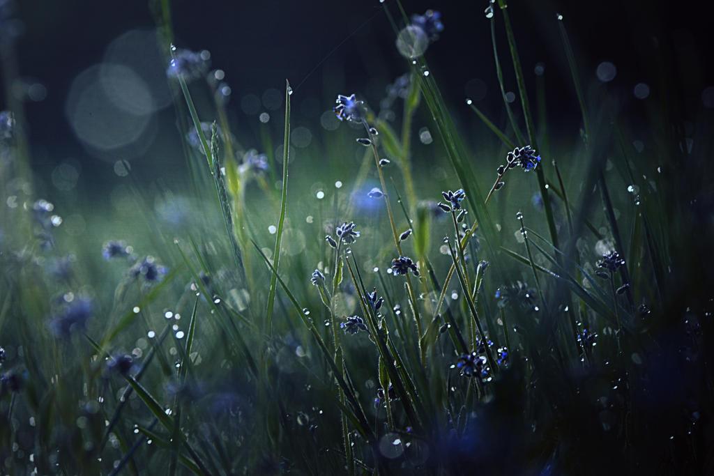 Blue dream by Piscisvolantis