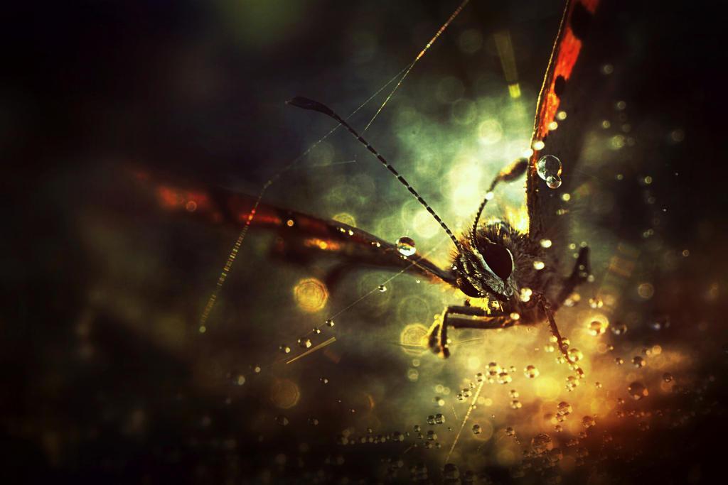 La Nebuleuse du Chaos by Piscisvolantis
