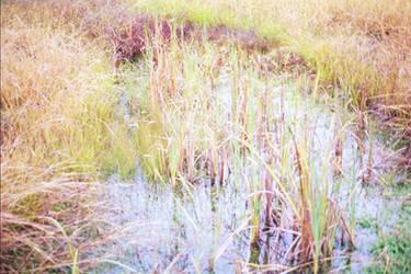 Swampy Stuff