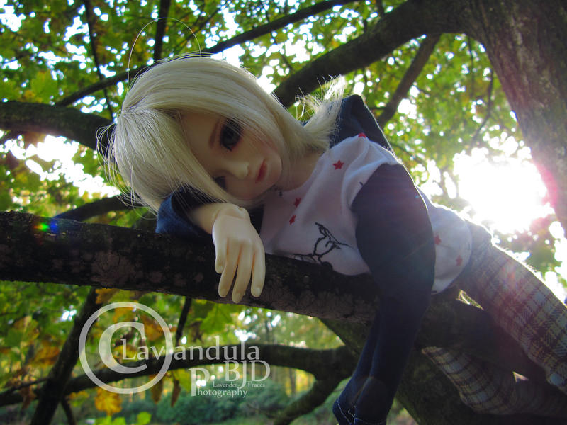 On a branch by Lavandula-BJD