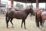 STOCK: BLM Mustang24