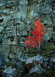 Thingvellir 1 by ragnaice