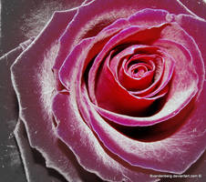 metallic rose by babsartcreations
