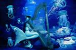 The Mermaids Harp