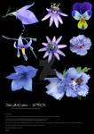 Stock purple flowers