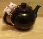 Taxidery mouse on small teapot