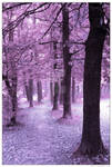violet forest 01 by negromante