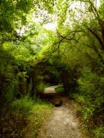 Trail by SEnigmaticX