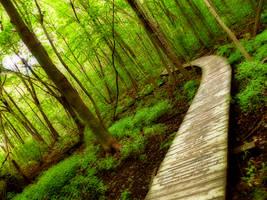 Path II by SEnigmaticX
