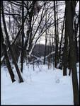 Winter Solitude XIII